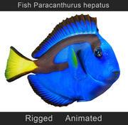 물고기 paracanthurus hepatus 3d model