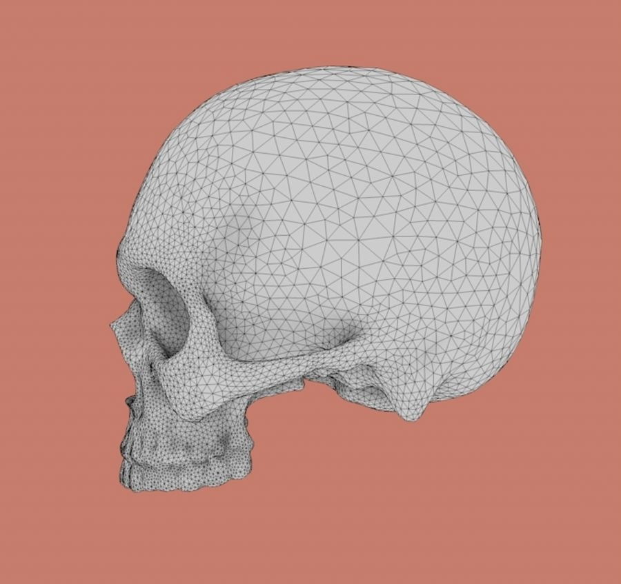 Skull without lower jaw royalty-free 3d model - Preview no. 4