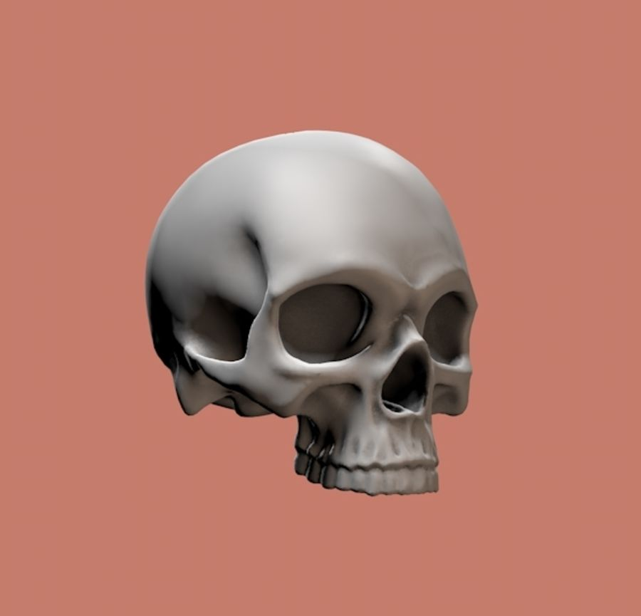 Skull without lower jaw royalty-free 3d model - Preview no. 2