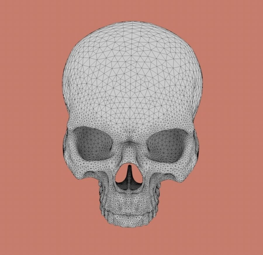 Skull without lower jaw royalty-free 3d model - Preview no. 5