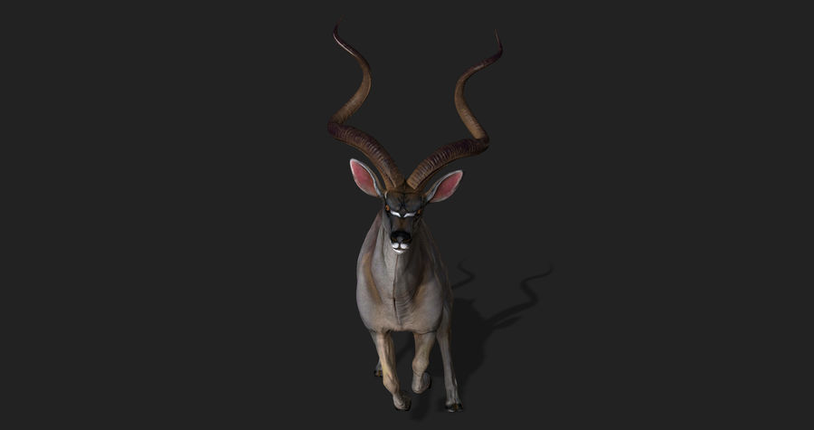 Kudu Antelope Animated royalty-free 3d model - Preview no. 8