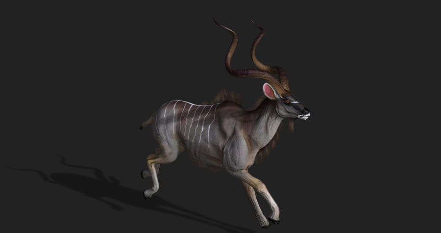 Kudu Antelope Animated royalty-free 3d model - Preview no. 5