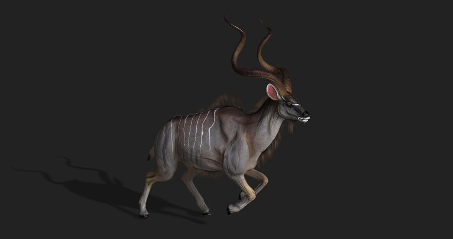 Kudu Antelope Animated royalty-free 3d model - Preview no. 7