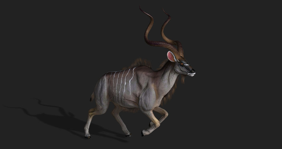 Kudu Antelope Animated royalty-free 3d model - Preview no. 4