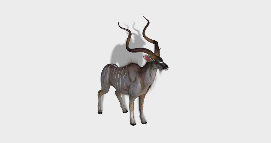 Kudu Antelope Animated royalty-free 3d model - Preview no. 3