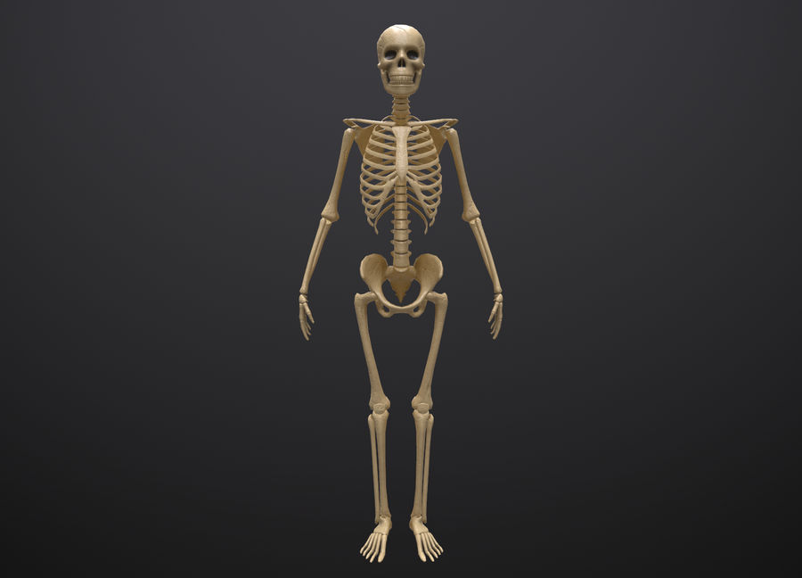 Substance Skeleton Army royalty-free 3d model - Preview no. 21
