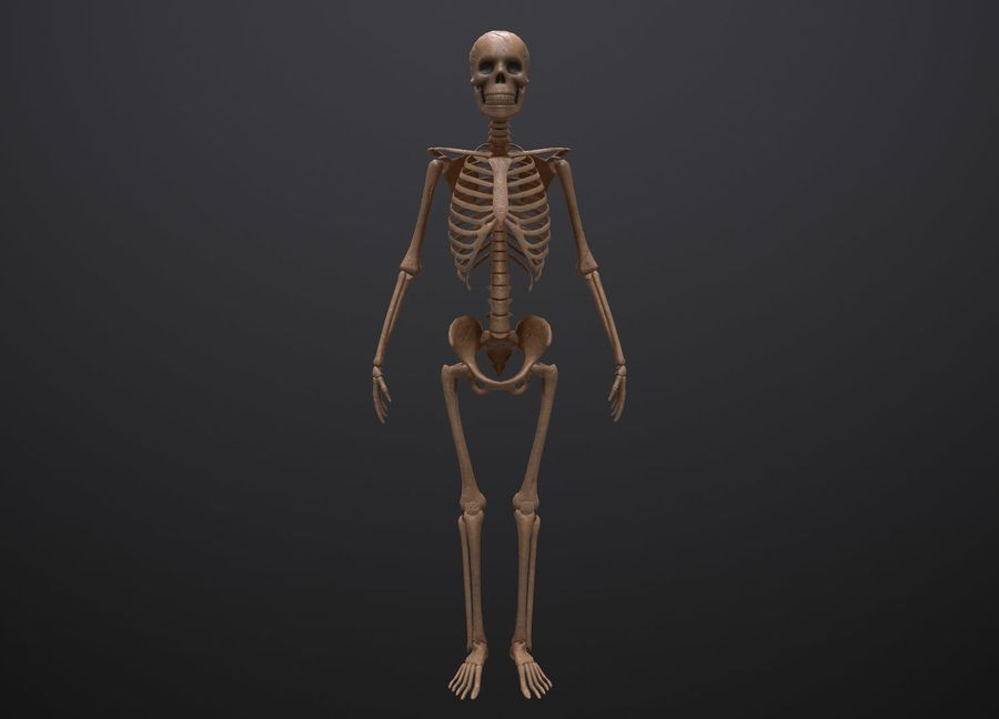 Substance Skeleton Army royalty-free 3d model - Preview no. 8