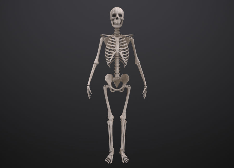 Substance Skeleton Army royalty-free 3d model - Preview no. 24