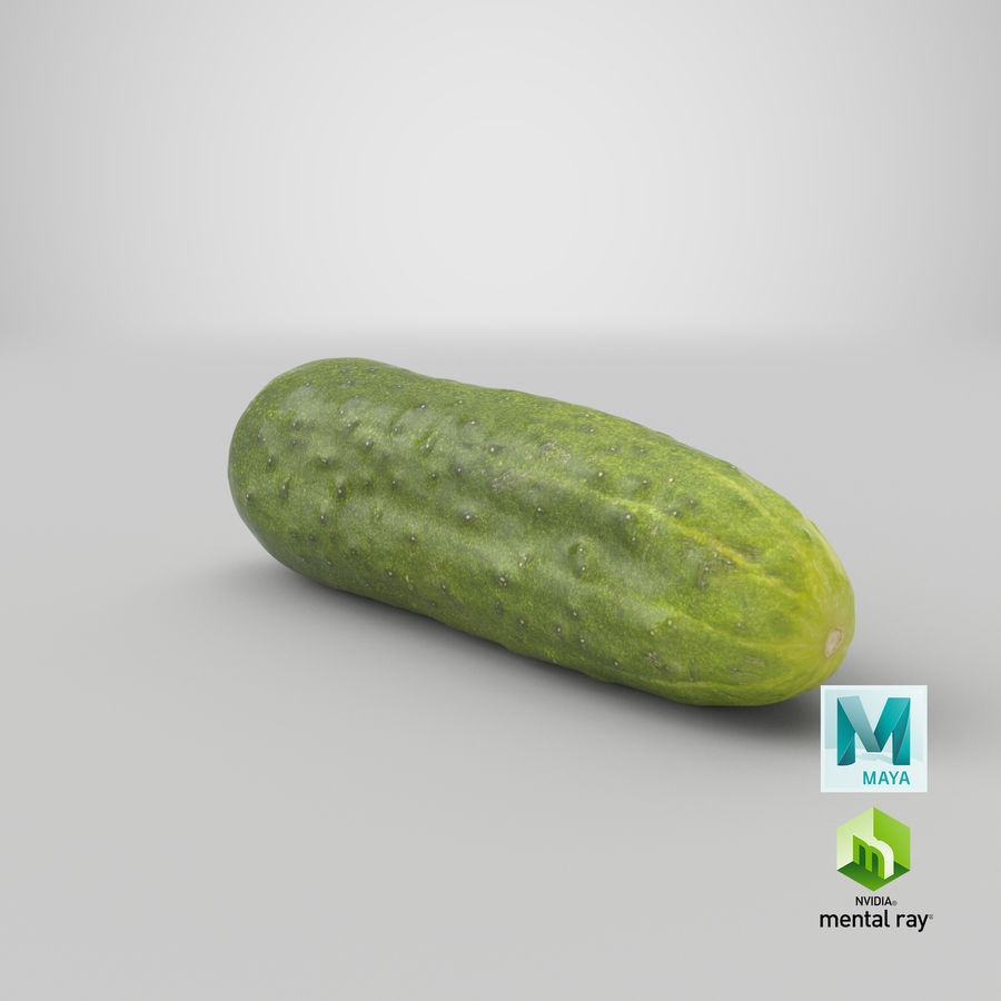 Cucumber 07 Hi Poly royalty-free 3d model - Preview no. 26