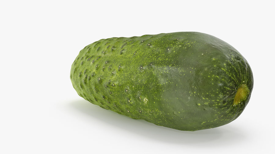 Cucumber 08 Hi Poly royalty-free 3d model - Preview no. 5