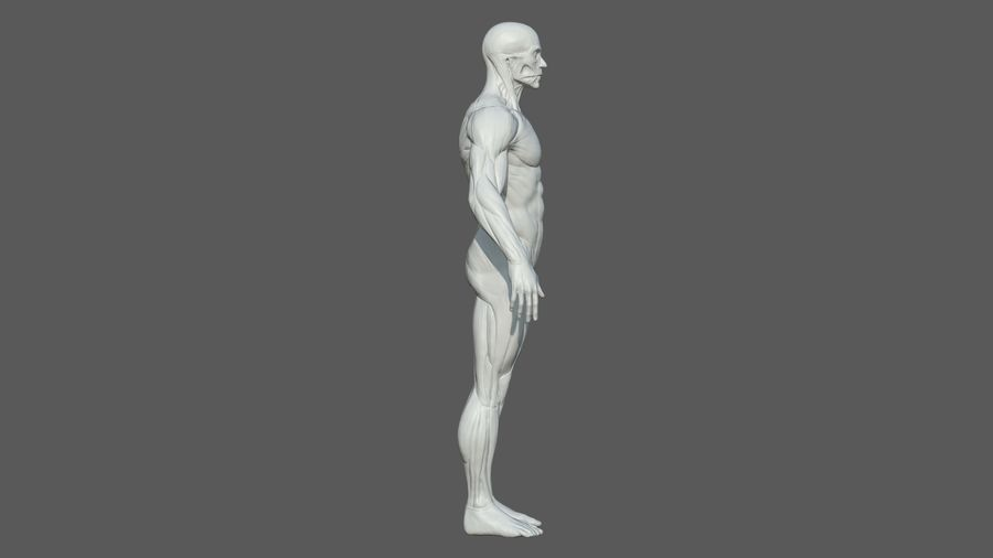 Character - Male Anatomy Body Base HighPoly royalty-free 3d model - Preview no. 10