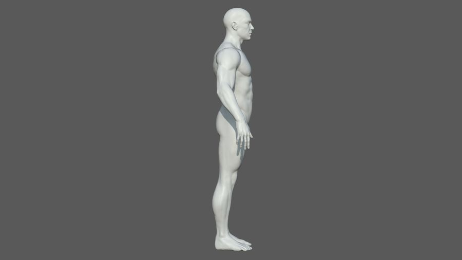 Character - Male Anatomy Body Base HighPoly royalty-free 3d model - Preview no. 34