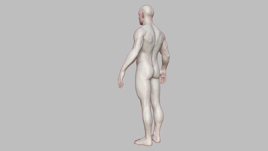 Character - Male Anatomy Body Base HighPoly royalty-free 3d model - Preview no. 47