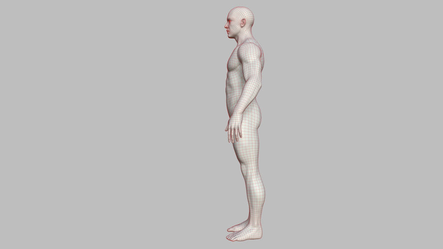 Character - Male Anatomy Body Base HighPoly royalty-free 3d model - Preview no. 46