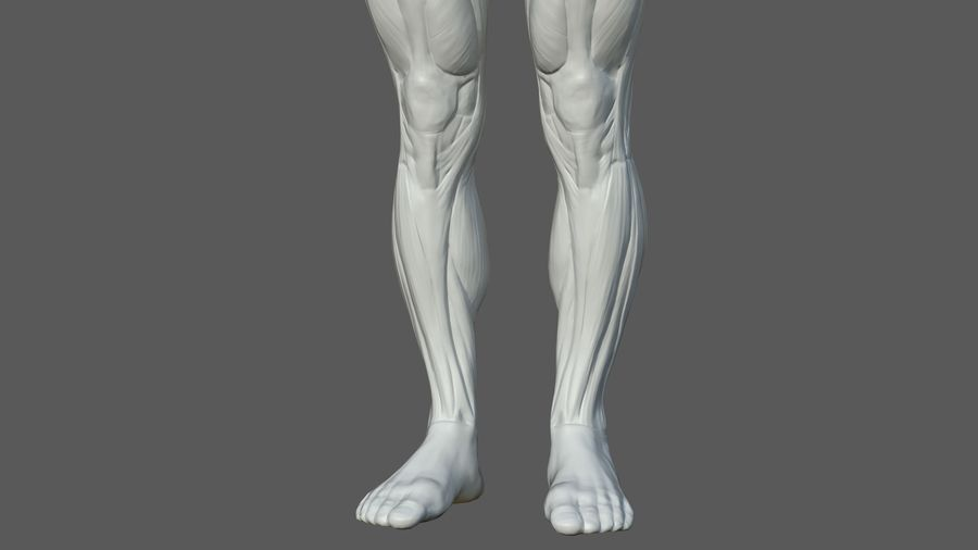 Character - Male Anatomy Body Base HighPoly royalty-free 3d model - Preview no. 16