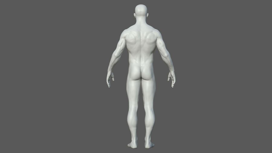 Character - Male Anatomy Body Base HighPoly royalty-free 3d model - Preview no. 32