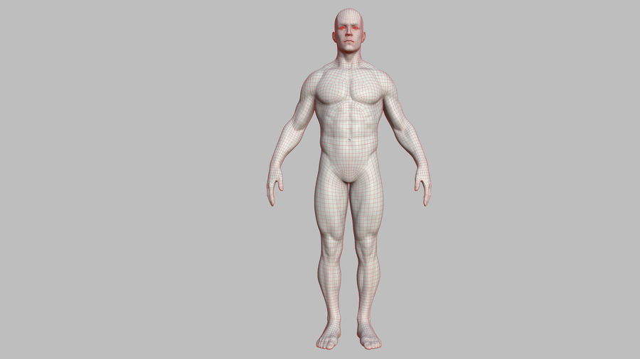 Character - Male Anatomy Body Base HighPoly royalty-free 3d model - Preview no. 44