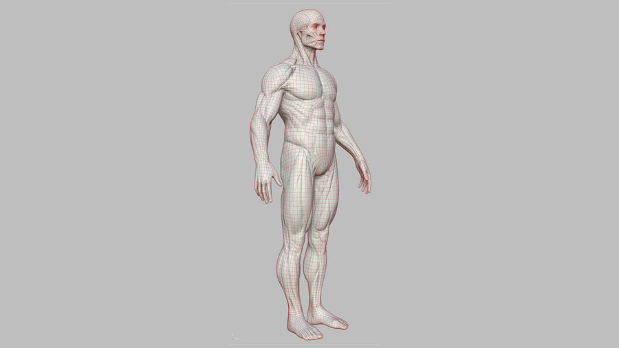 Character - Male Anatomy Body Base HighPoly royalty-free 3d model - Preview no. 27
