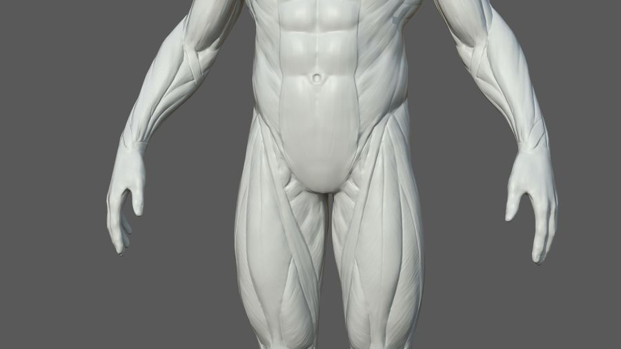 Character - Male Anatomy Body Base HighPoly royalty-free 3d model - Preview no. 15