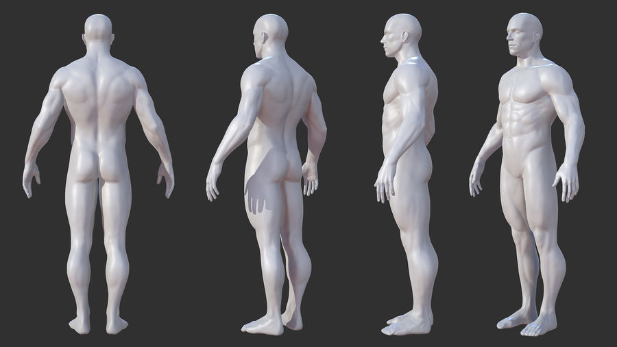 Character - Male Anatomy Body Base HighPoly royalty-free 3d model - Preview no. 3