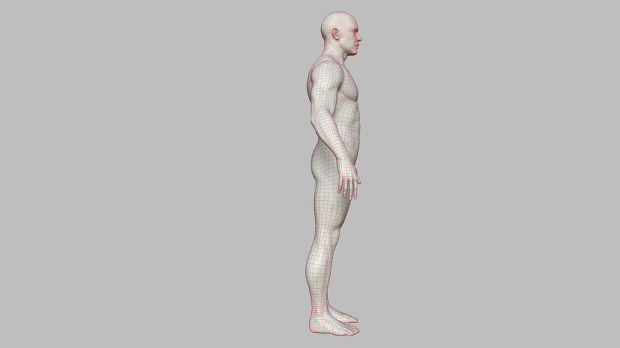 Character - Male Anatomy Body Base HighPoly royalty-free 3d model - Preview no. 50