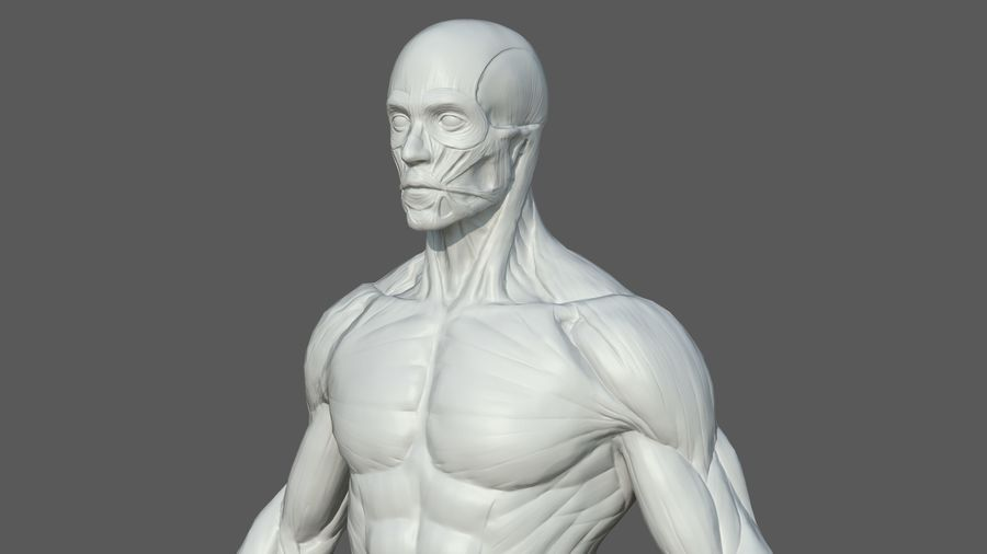Character - Male Anatomy Body Base HighPoly royalty-free 3d model - Preview no. 53
