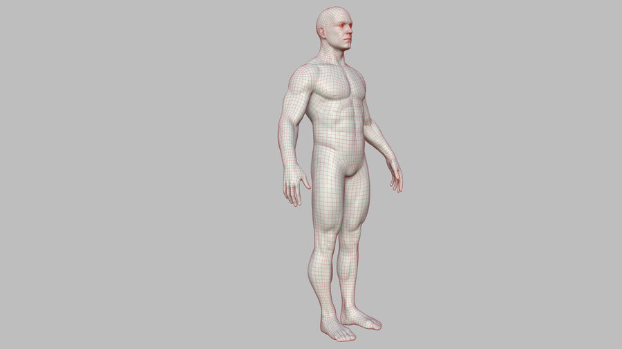 Character - Male Anatomy Body Base HighPoly royalty-free 3d model - Preview no. 51