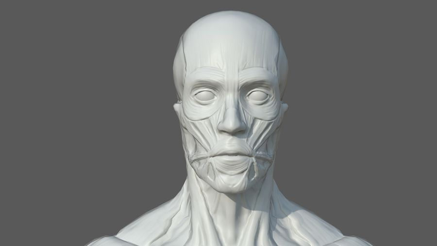 Character - Male Anatomy Body Base HighPoly royalty-free 3d model - Preview no. 18