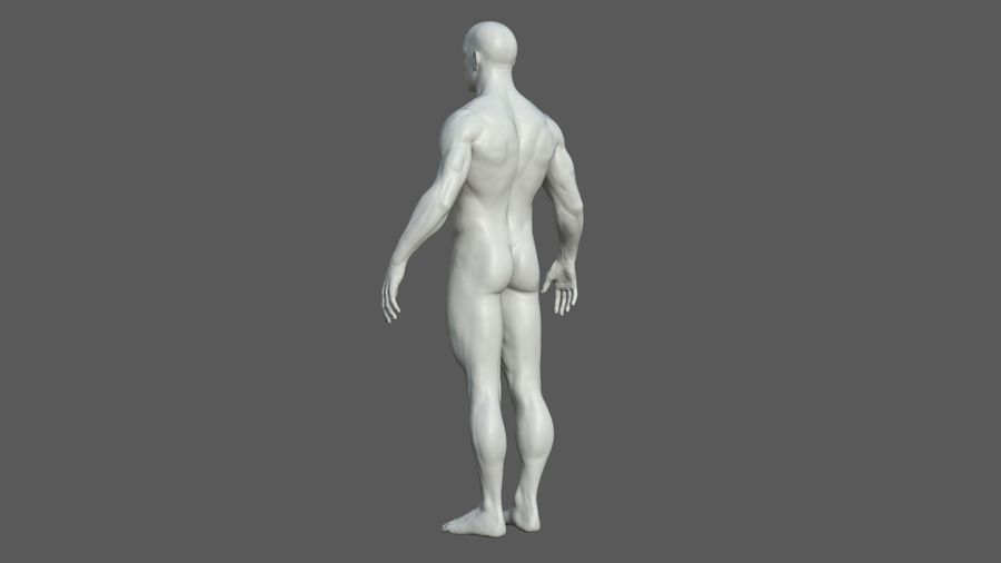 Character - Male Anatomy Body Base HighPoly royalty-free 3d model - Preview no. 31