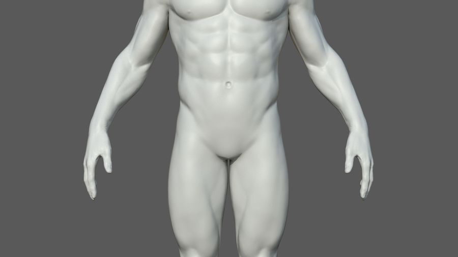 Character - Male Anatomy Body Base HighPoly royalty-free 3d model - Preview no. 39