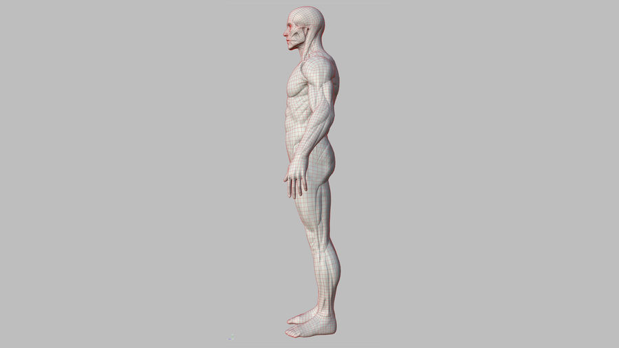 Character - Male Anatomy Body Base HighPoly royalty-free 3d model - Preview no. 22