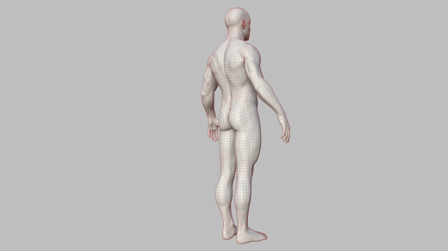 Character - Male Anatomy Body Base HighPoly royalty-free 3d model - Preview no. 49