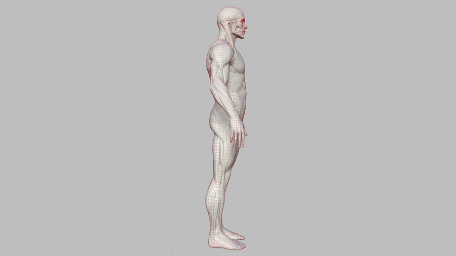 Character - Male Anatomy Body Base HighPoly royalty-free 3d model - Preview no. 26