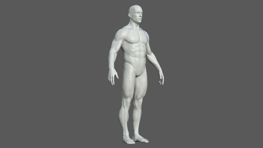 Character - Male Anatomy Body Base HighPoly royalty-free 3d model - Preview no. 35