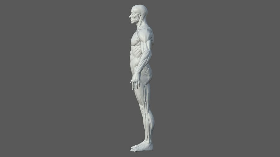 Character - Male Anatomy Body Base HighPoly royalty-free 3d model - Preview no. 6