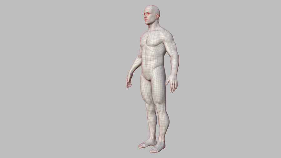 Character - Male Anatomy Body Base HighPoly royalty-free 3d model - Preview no. 45