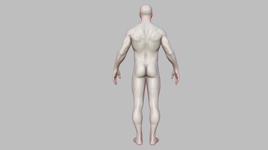 Character - Male Anatomy Body Base HighPoly royalty-free 3d model - Preview no. 48