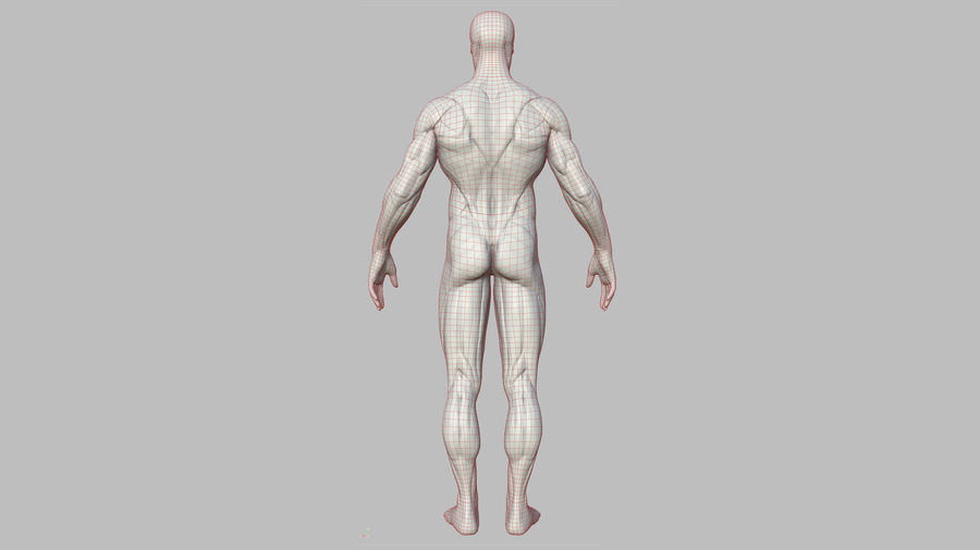 Character - Male Anatomy Body Base HighPoly royalty-free 3d model - Preview no. 24