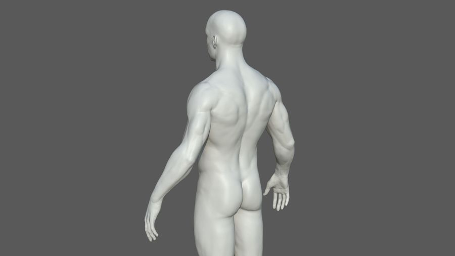 Character - Male Anatomy Body Base HighPoly royalty-free 3d model - Preview no. 38