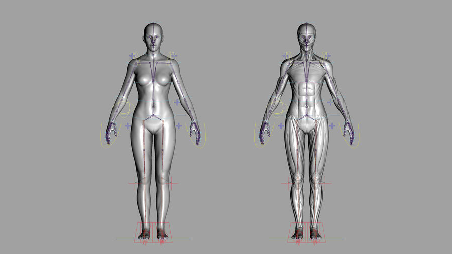 Character - Male Anatomy Body Base HighPoly royalty-free 3d model - Preview no. 54