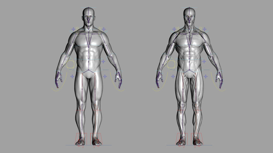 Character - Male Anatomy Body Base HighPoly royalty-free 3d model - Preview no. 55