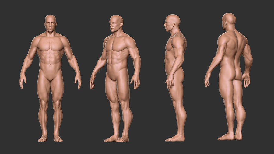 Character - Male Anatomy Body Base HighPoly royalty-free 3d model - Preview no. 8