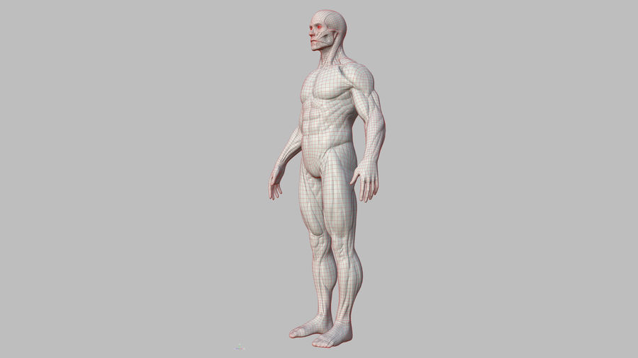 Character - Male Anatomy Body Base HighPoly royalty-free 3d model - Preview no. 21
