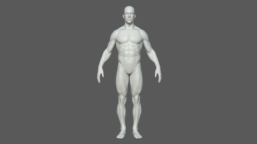 Character - Male Anatomy Body Base HighPoly royalty-free 3d model - Preview no. 28