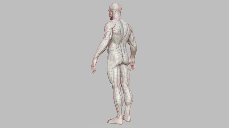 Character - Male Anatomy Body Base HighPoly royalty-free 3d model - Preview no. 23