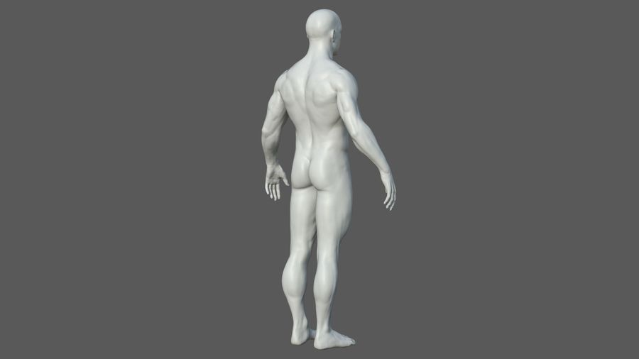 Character - Male Anatomy Body Base HighPoly royalty-free 3d model - Preview no. 33