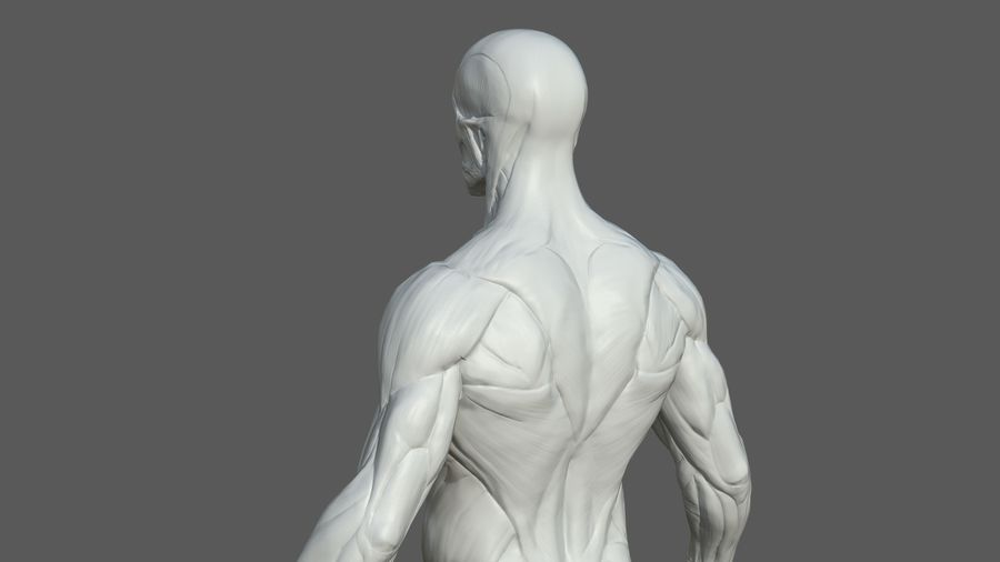 Character - Male Anatomy Body Base HighPoly royalty-free 3d model - Preview no. 14