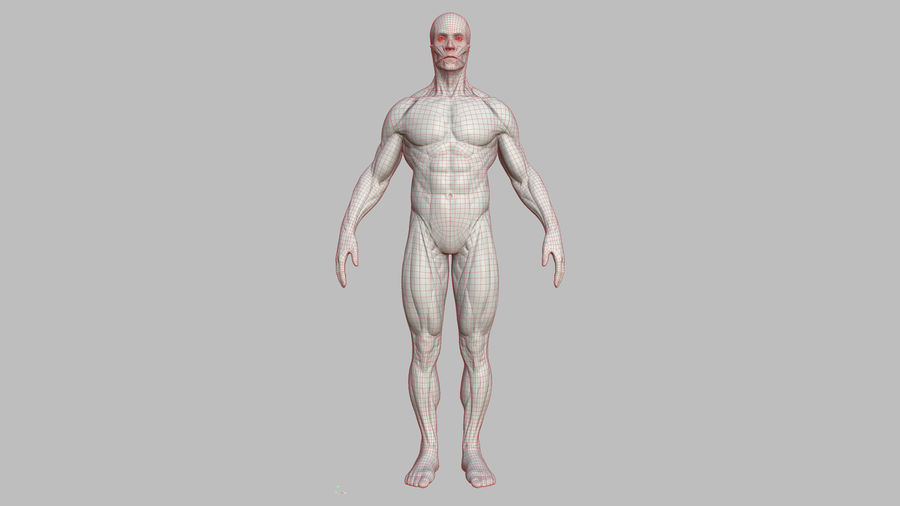 Character - Male Anatomy Body Base HighPoly royalty-free 3d model - Preview no. 20