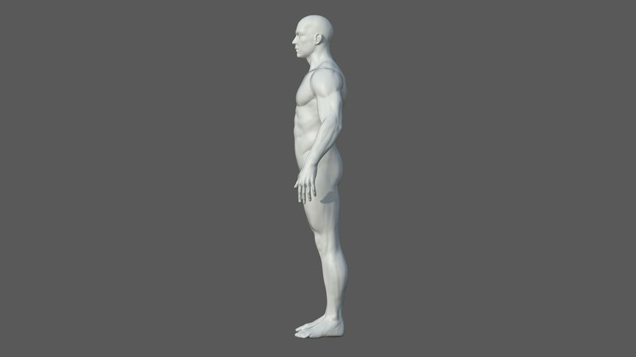 Character - Male Anatomy Body Base HighPoly royalty-free 3d model - Preview no. 30