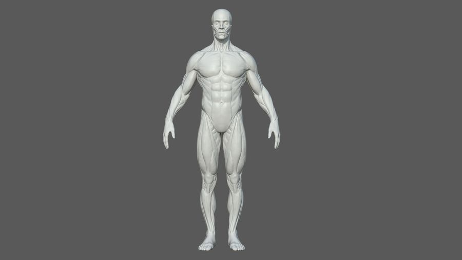 Character - Male Anatomy Body Base HighPoly royalty-free 3d model - Preview no. 4